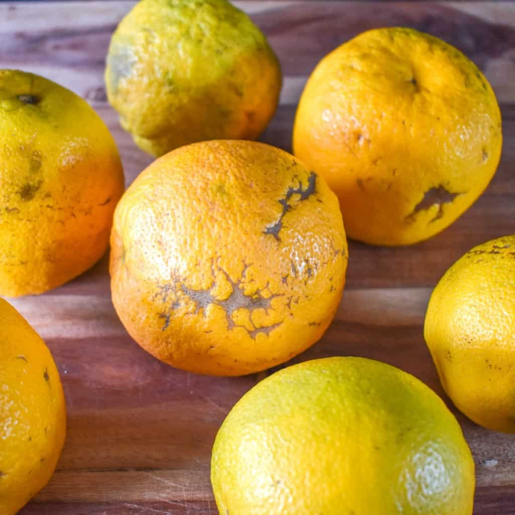 Seven sour oranges on a wood cutting board.